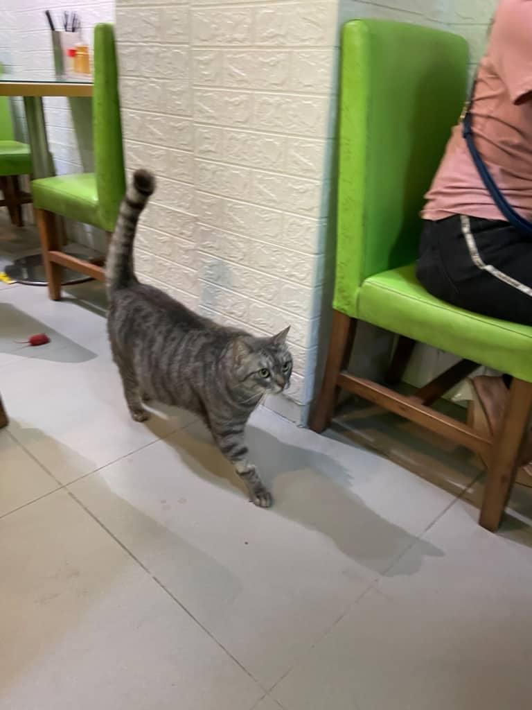 太子黃店_貓貓陪你食米線_新川美食